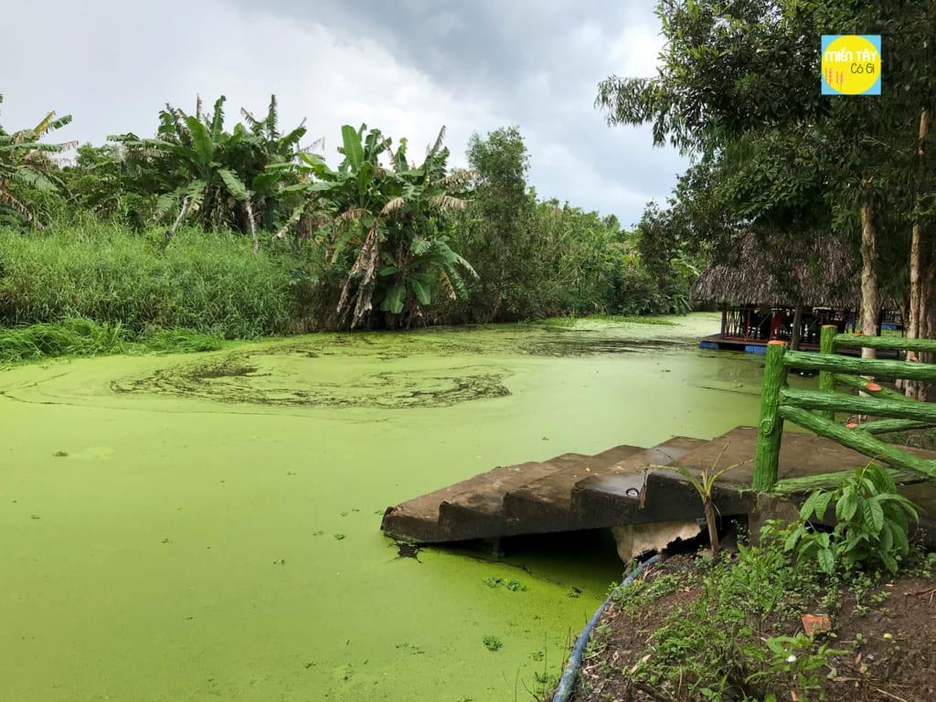 Bèo xanh phủ khắp mặt nước
