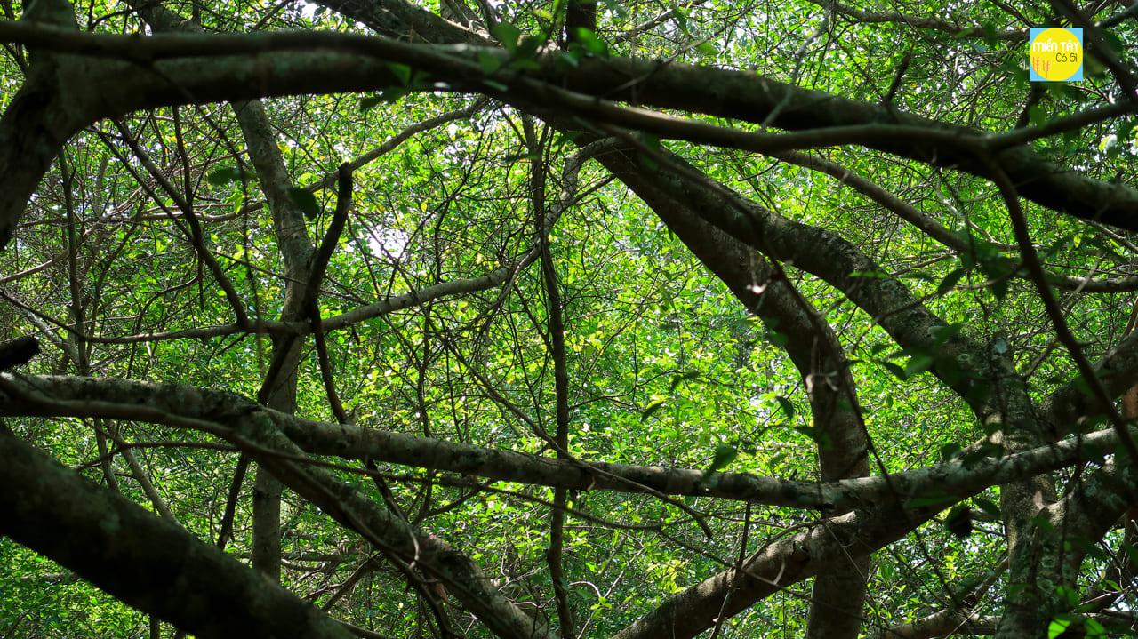 Các nhánh cây tỏa ra khắp nơi