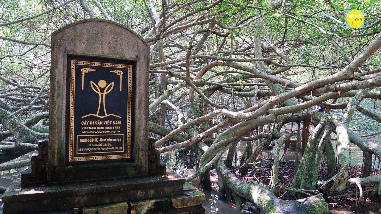 Cây di sản Giàn Gừa Việt Nam