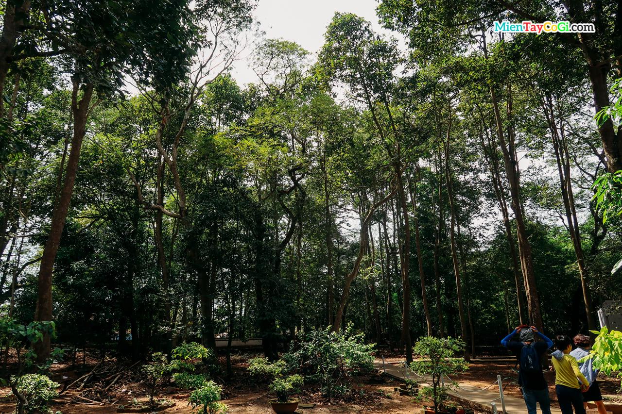 Khuôn viên chùa là nơi sinh sống hàng trăm con dơi
