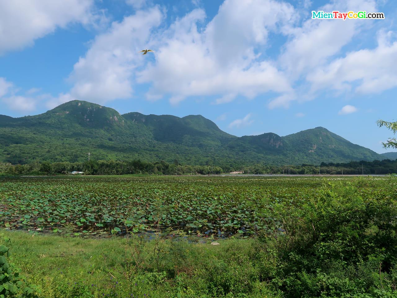 Khung cảnh ao sen hồ An Hải trước chùa