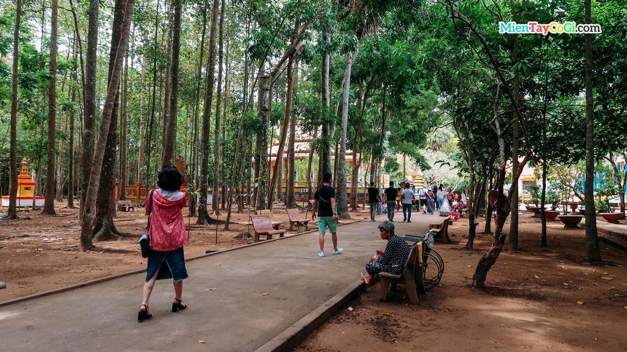 Lối vào nhiều cây xanh ở chùa Dơi
