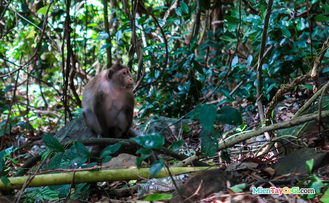Những chú khỉ tự do cư ngụ tại đây