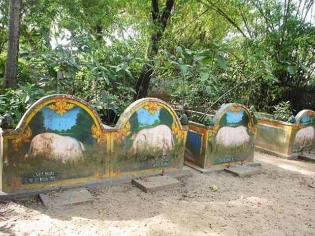 Những ngôi mộ heo 5 móng tại chùa Dơi