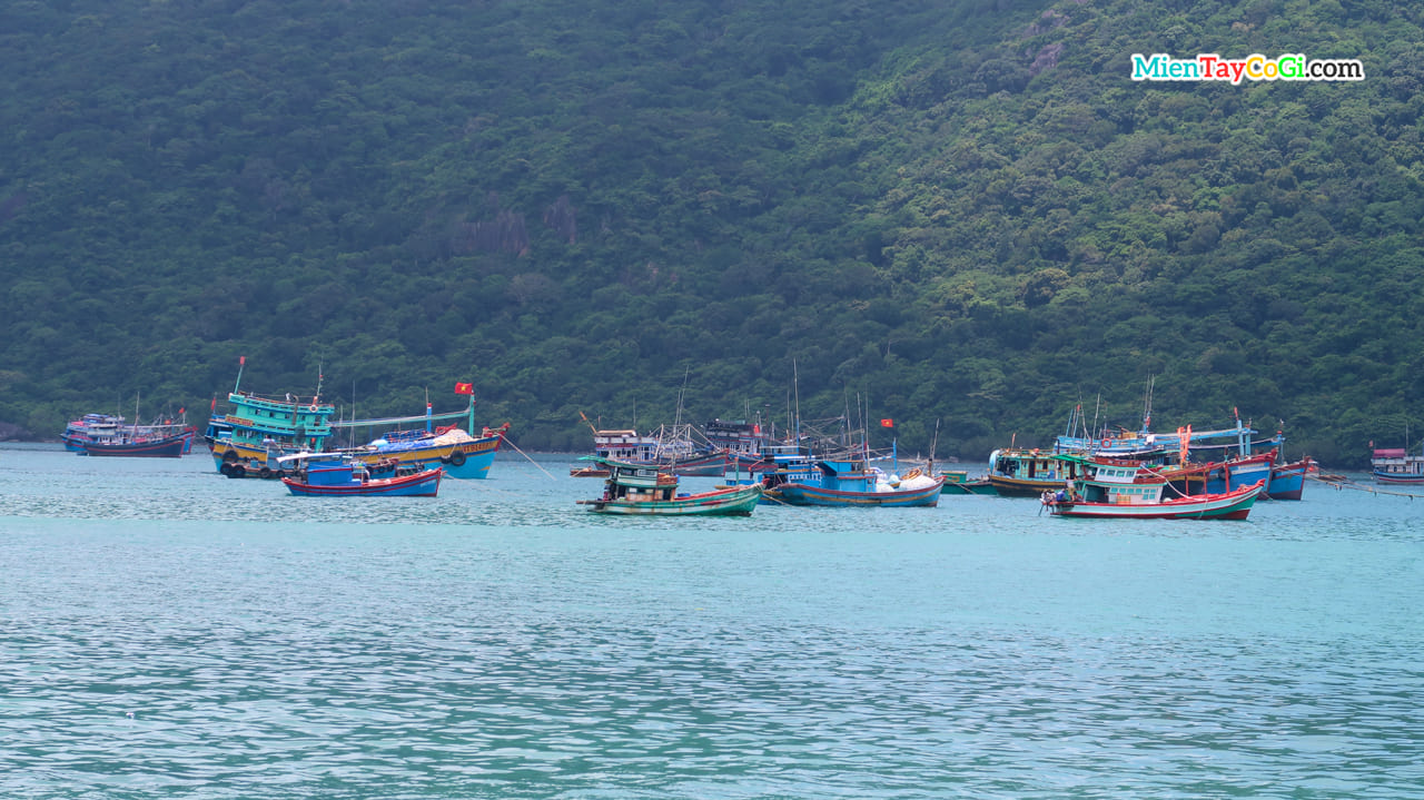 Tàu đánh cá neo đậu tại Bến Đầm Côn Đảo