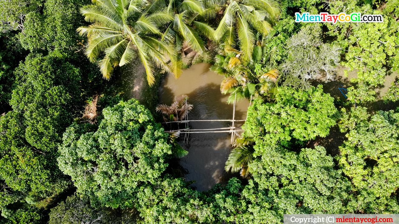 Cây cầu khỉ ở vườn trái cây Ba Cống Cần Thơ