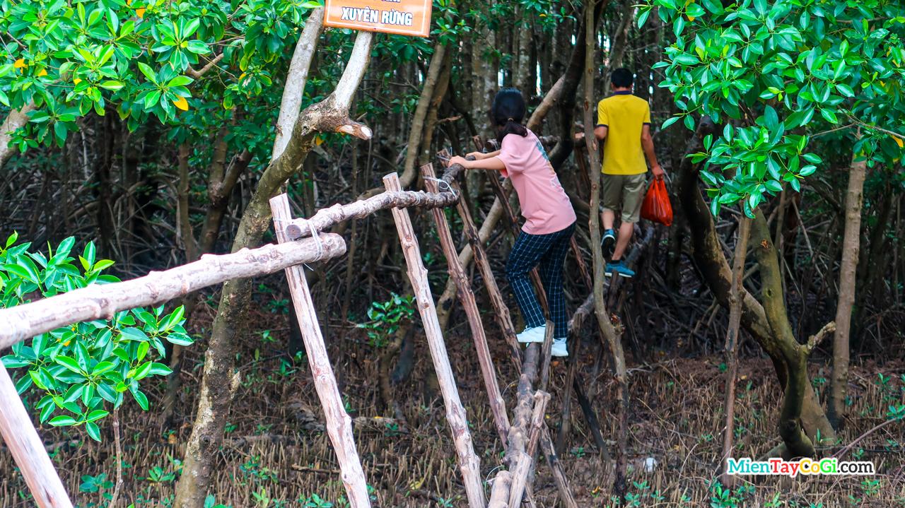 Đi xuyên rừng ở Vườn Quốc Gia Mũi Cà Mau