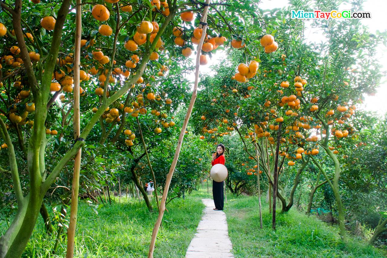 Pink tangerine garden