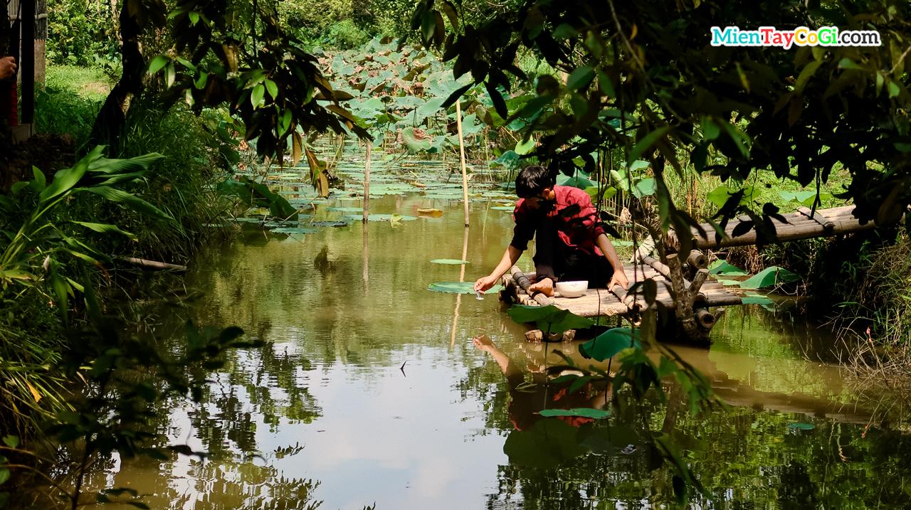 Đút cá ăn cơm Cồn Sơn