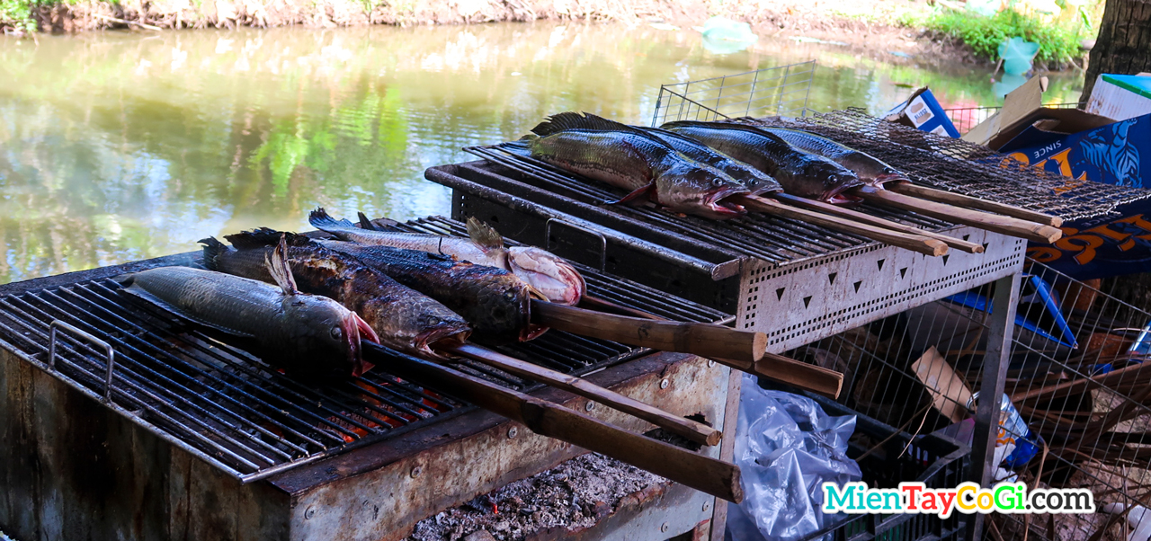 Grilled snakehead fish is a specialty in Son Islet