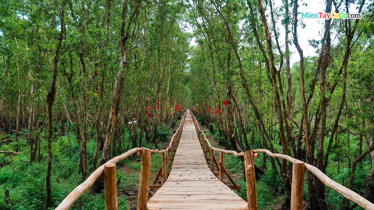 Cầu gỗ tình yêu rừng tràm Trà Sư