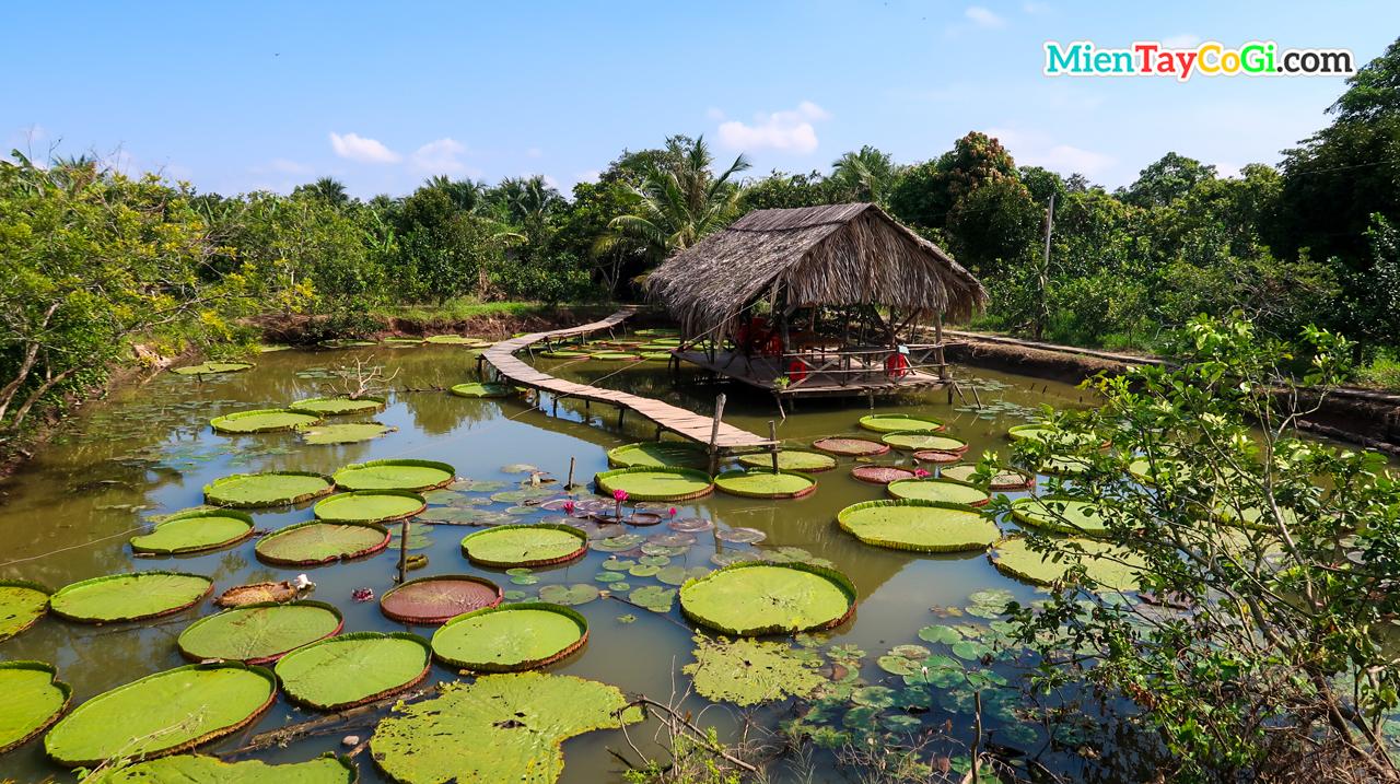 Khung cảnh miệt vườn thơ mộng ở Cồn Sơn