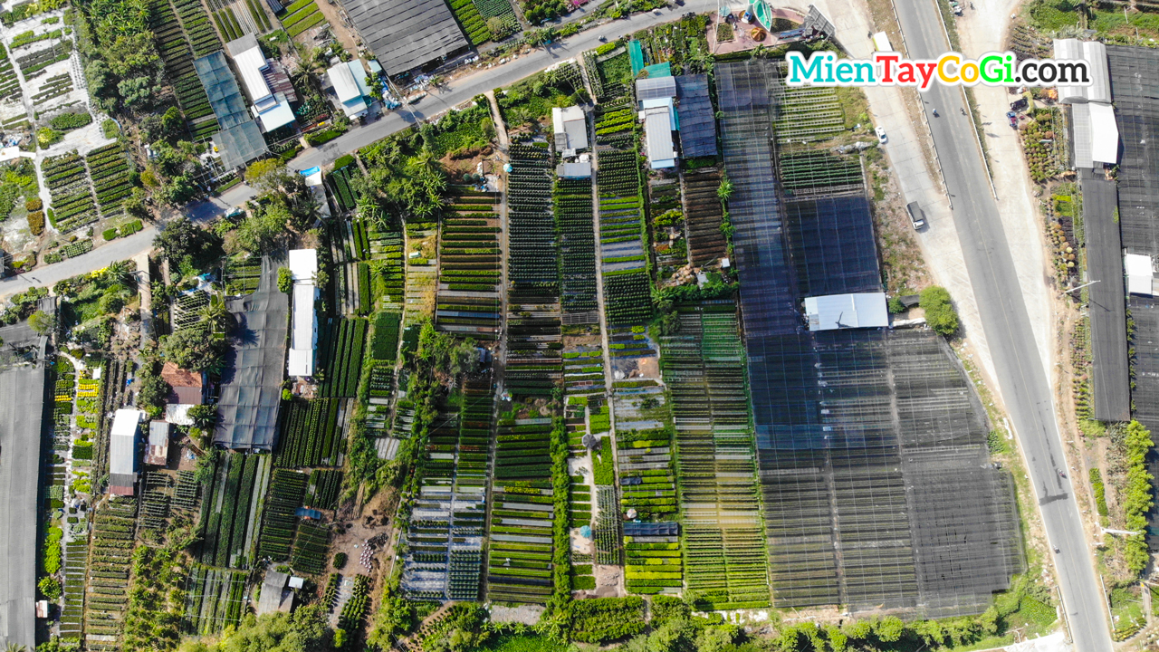 Sa Dec flower village viewed from above
