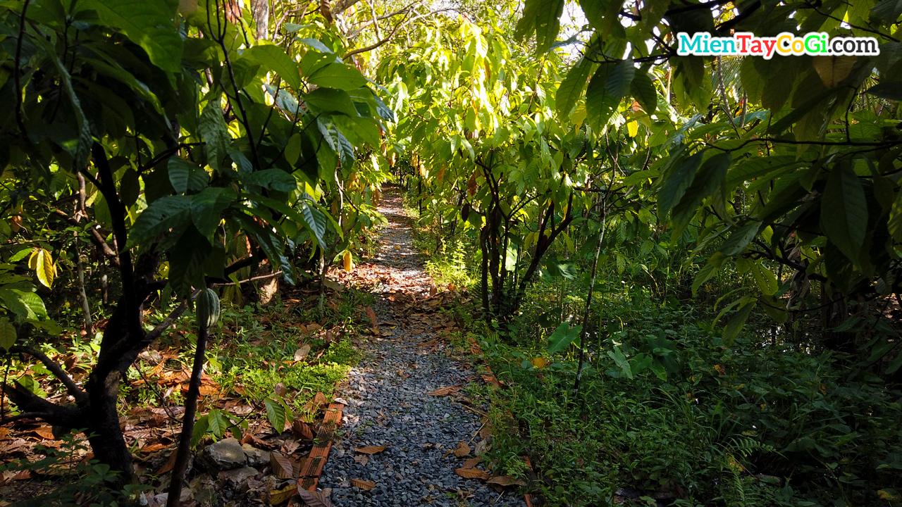 Lối vào tham quan vườn ca cao Mười Cương