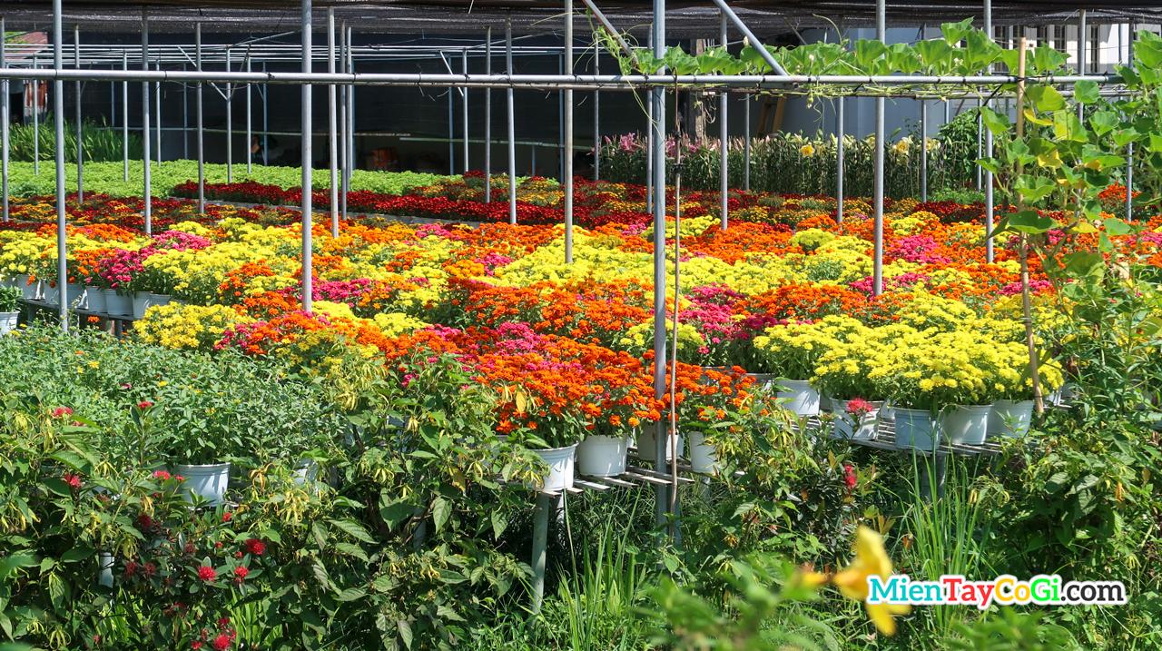 Vườn hoa tuyệt đẹp ở Đồng Tháp
