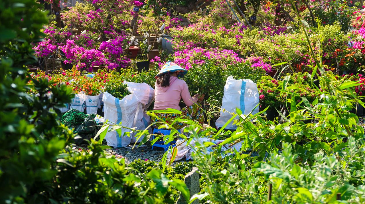 Người dân sắp xếp hoa giấy