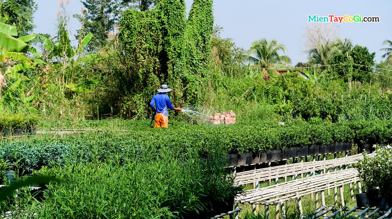 Người dân tưới cây cho vườn hoa
