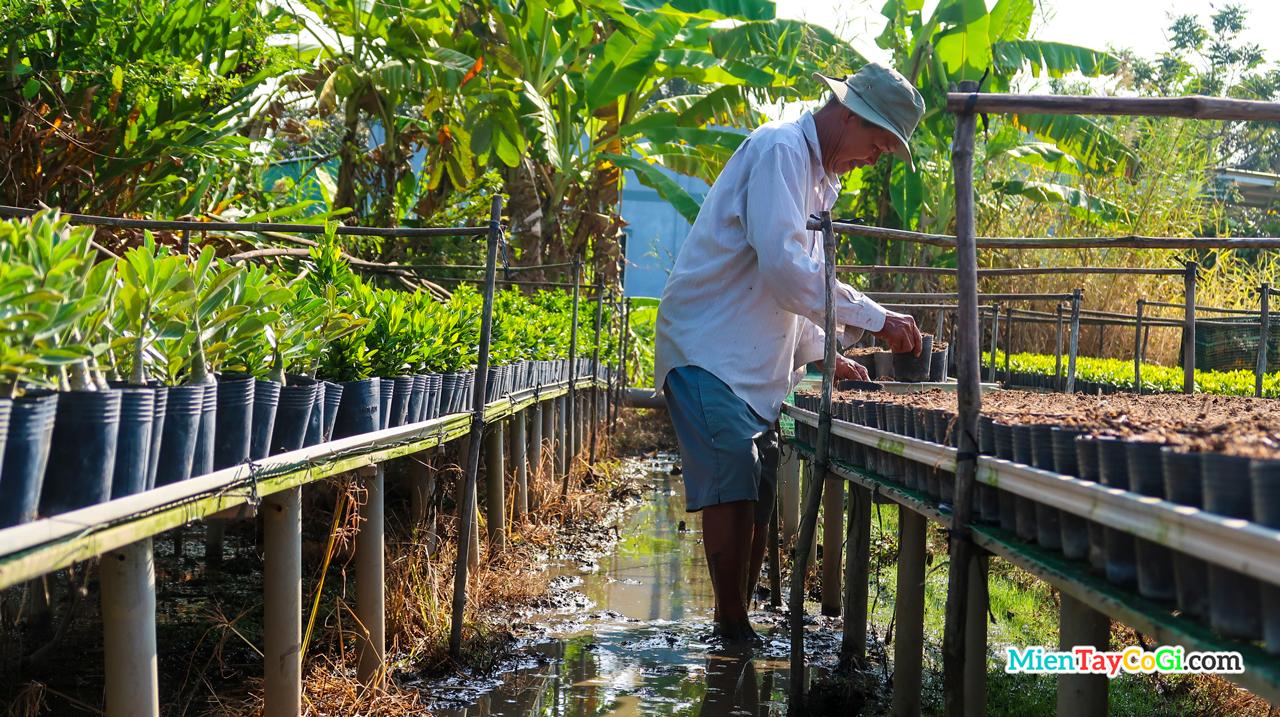 Người dân trồng hoa chăm sóc cây