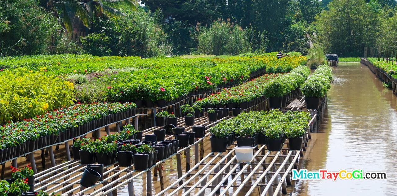 Người dân trồng hoa trong làng hoa Sa Đéc
