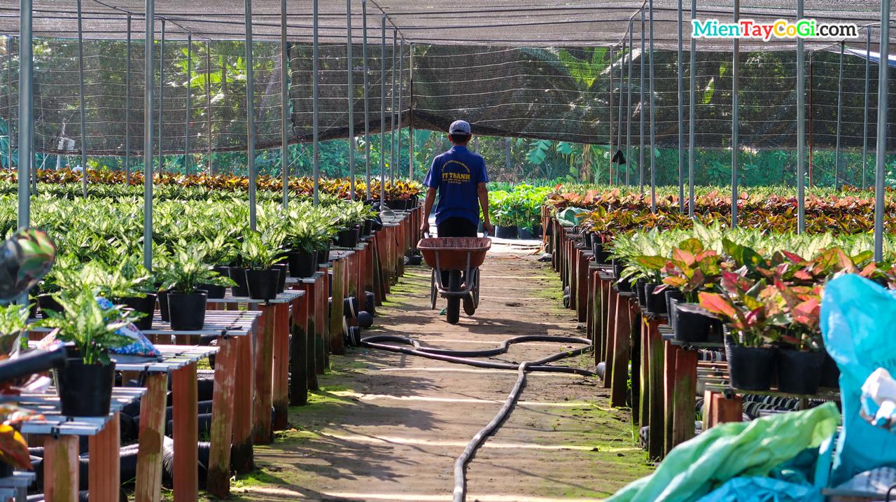 Người trồng hoa