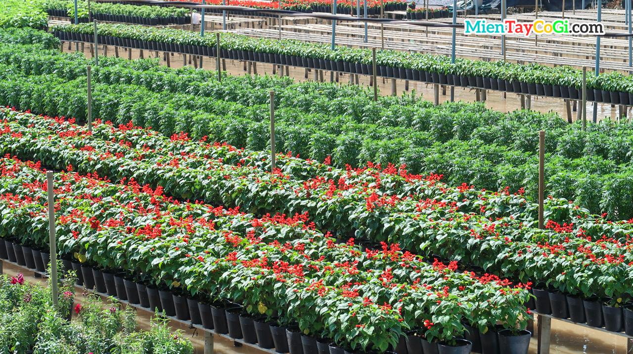 Những chậu hoa được trồng cách mặt nước 1 khoảng cách