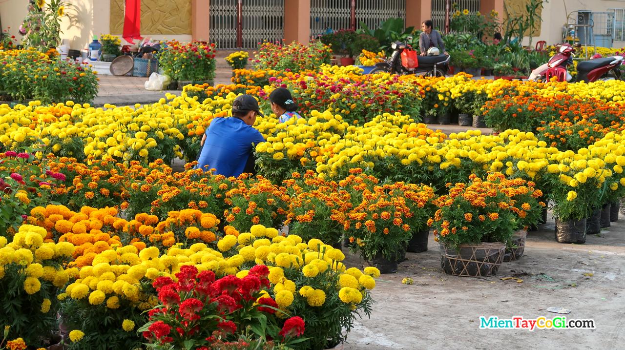 Những giỏ hoa vàng rực rỡ ngày xuân ở chợ hoa Tết miền Tây