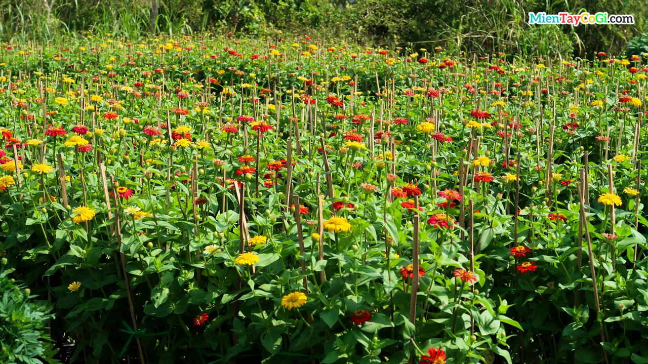 Sắc hoa đỏ vàng rực rỡ