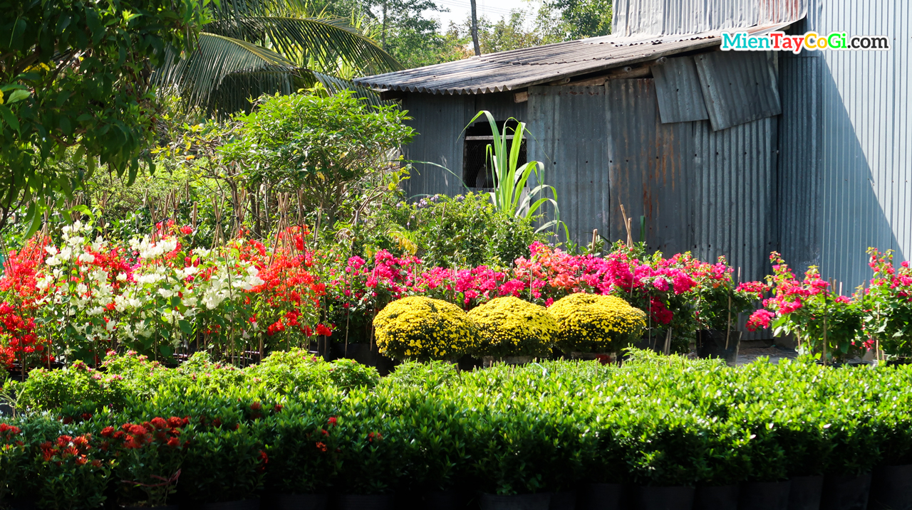 The farmer's house is filled with colorful flowers