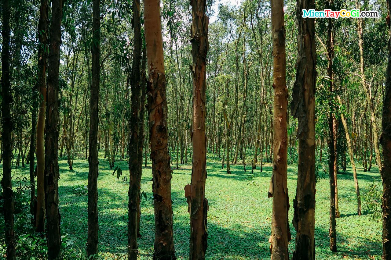 Trà Sư có nhiều cây tràm và bèo nước xanh tuyệt đẹp