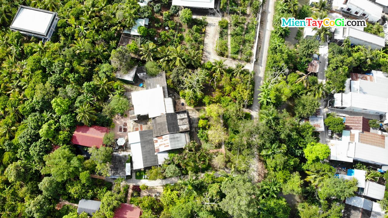 Vườn ca cao Mười Cương Cần Thơ flycam