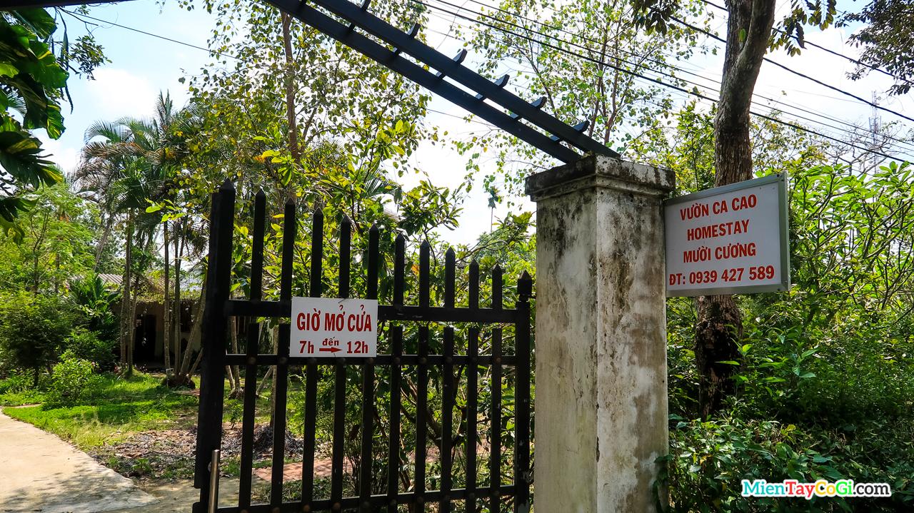 Vườn ca cao Mười Cương là vườn đầu tiên ở Việt Nam về trồng ca cao