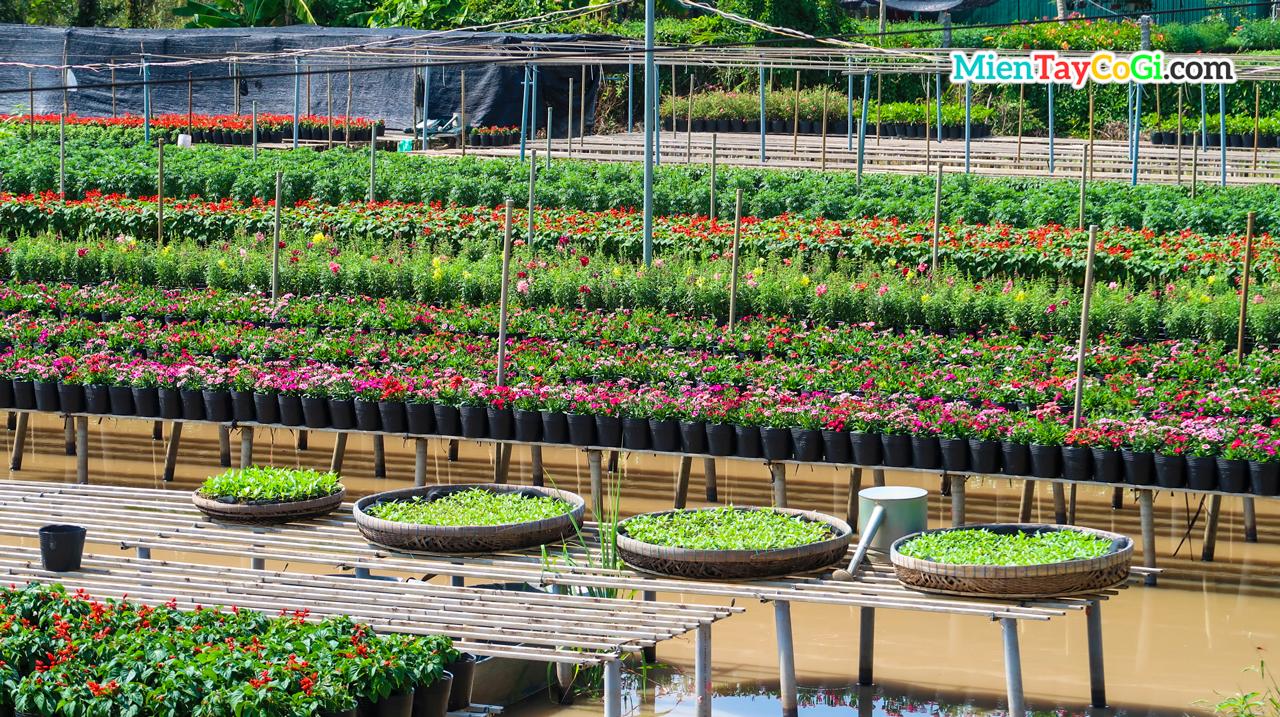 Vườn hoa Tân Quy Đông Sa Đéc Đồng Tháp