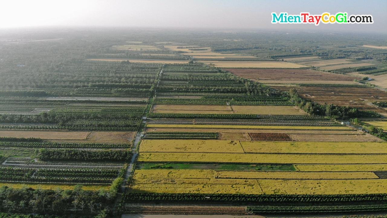 Đồng lúa miền Tây nhìn từ trên cao