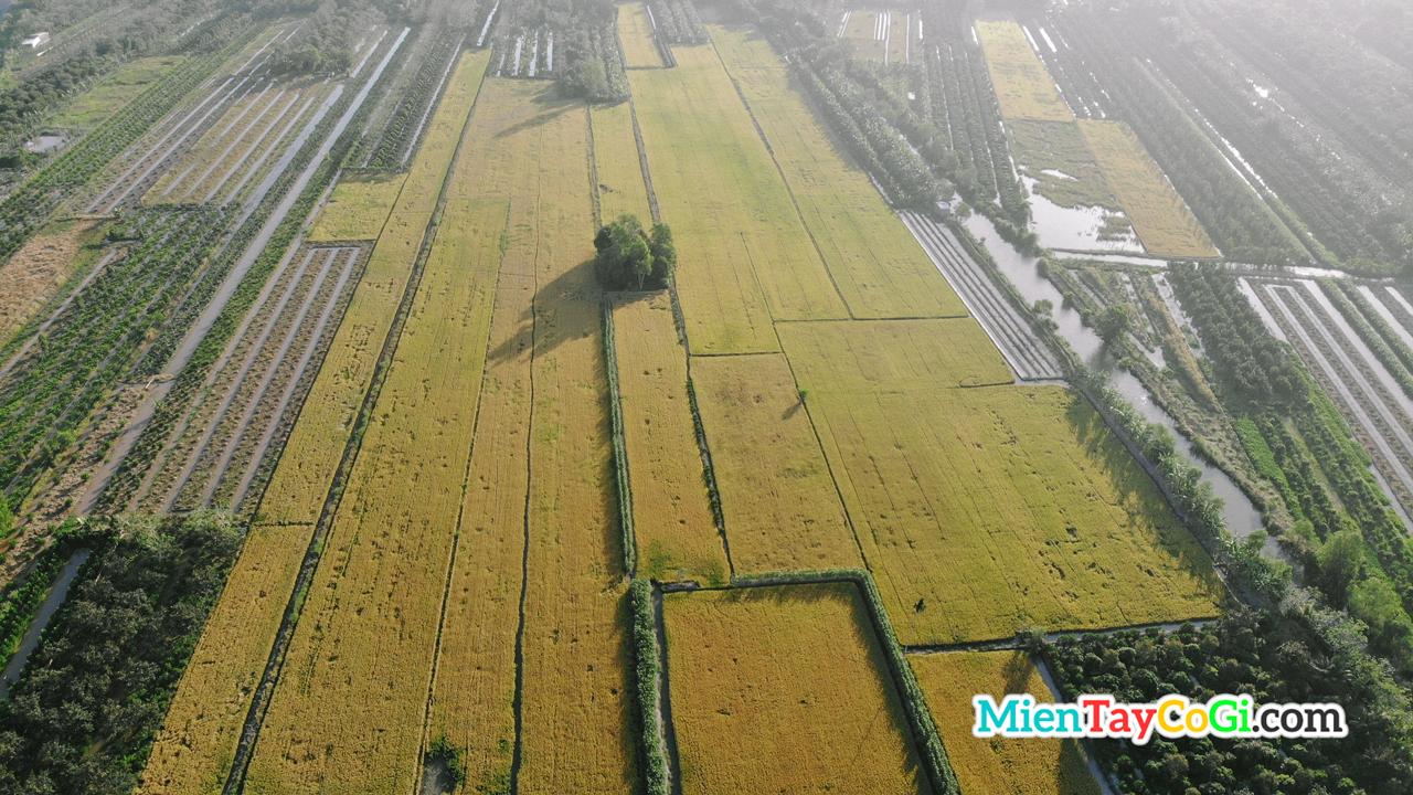 Múa lúa chín miền Tây nhin từ trên cao
