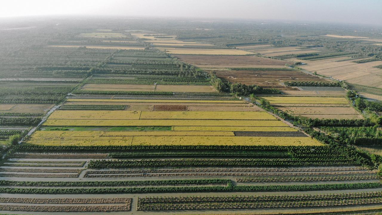 Ruộng lúa miền Tây