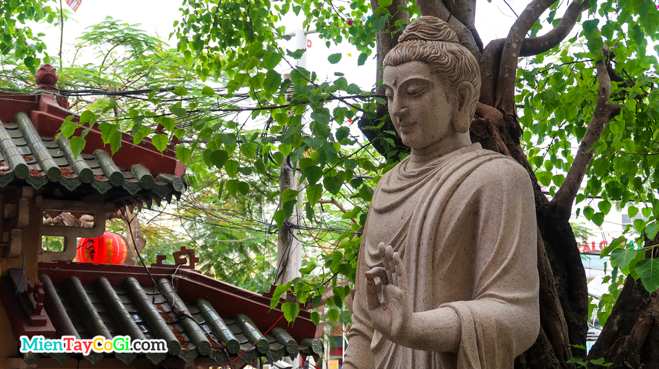 Tượng Phật Thích Ca dưới gốc cây cổ thụ chùa Phật Học