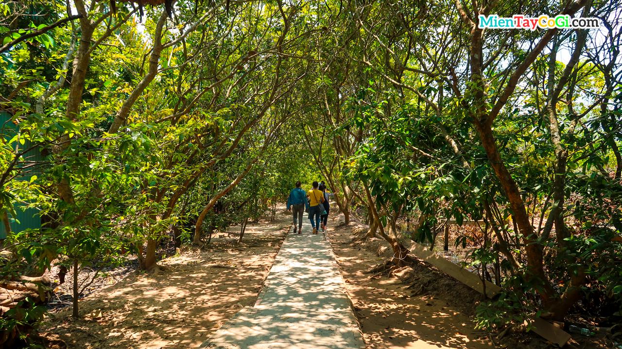 Đi tản bộ dưới những hàng cây xanh mát ở Cồn Phụng và Cồn Thới Sơn