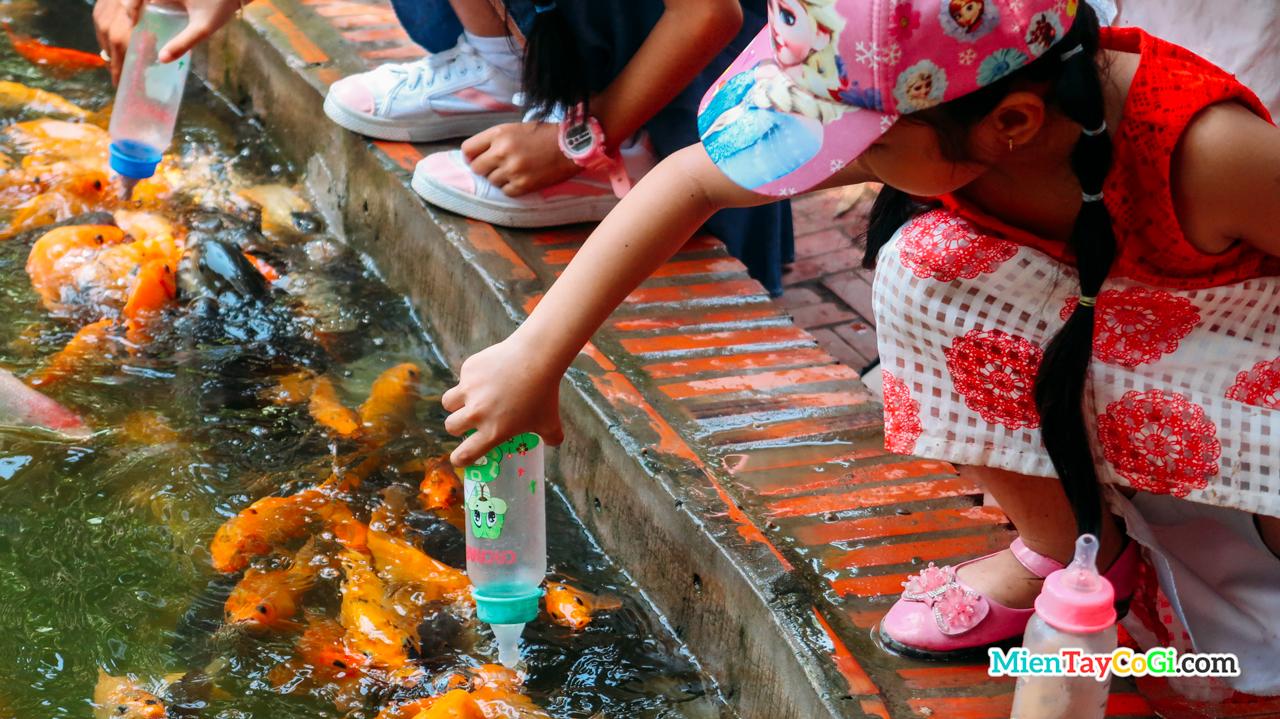 Cá bú bình Cồn Phụng