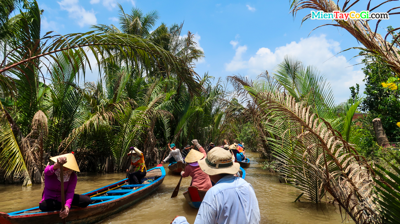 Dozens of people rowing three-leaf canoes in Con Thoi Son