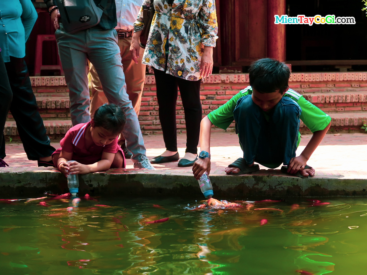 The children are attentively feeding the fish with a bottle