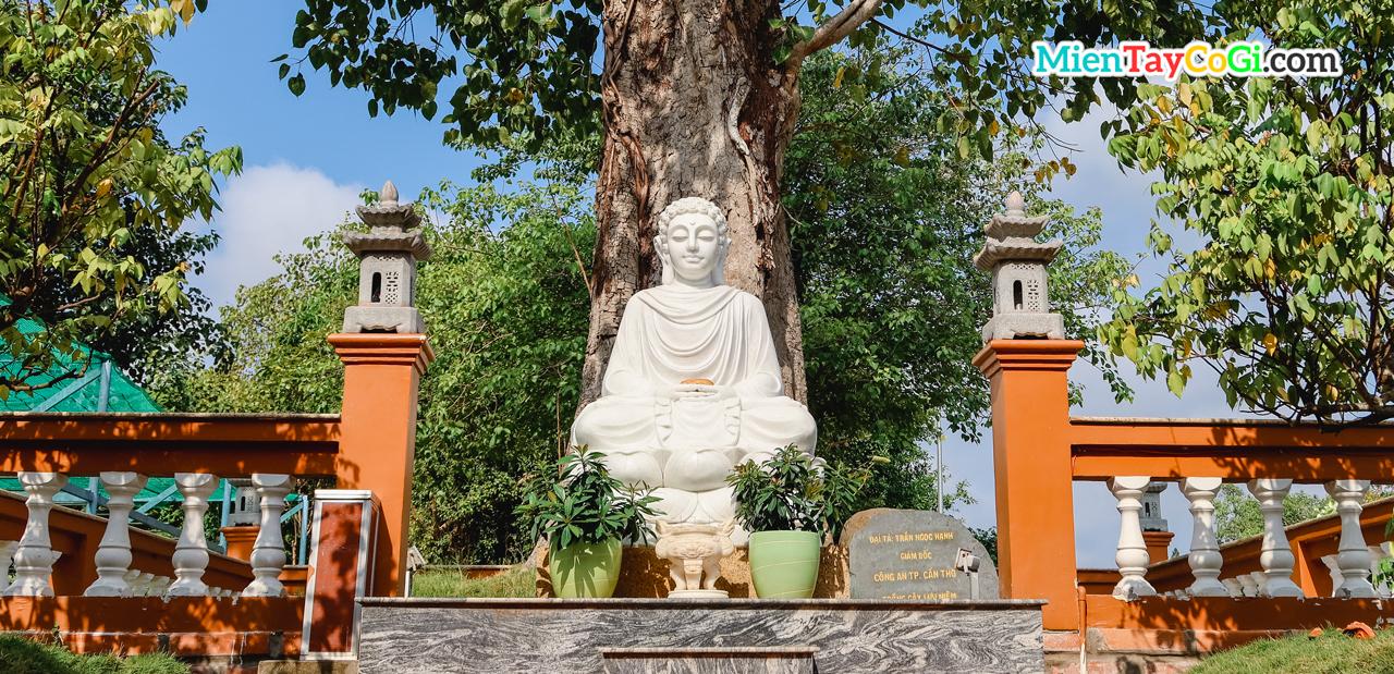 Tượng Phật ngồi dưới gốc bồ đề