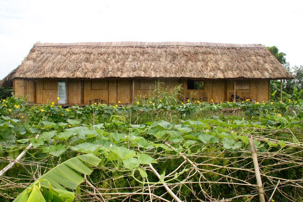 Không gian xanh sau nhà Nguyen Shack homestay Cần Thơ