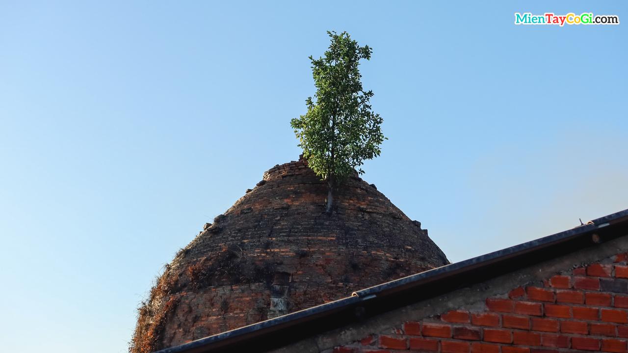 Một cây xanh mọc ra từ lò gạch