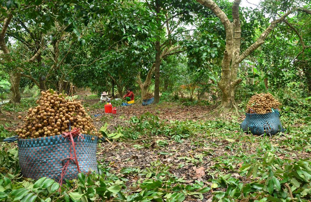 Tham gia thu hoạch trái cây