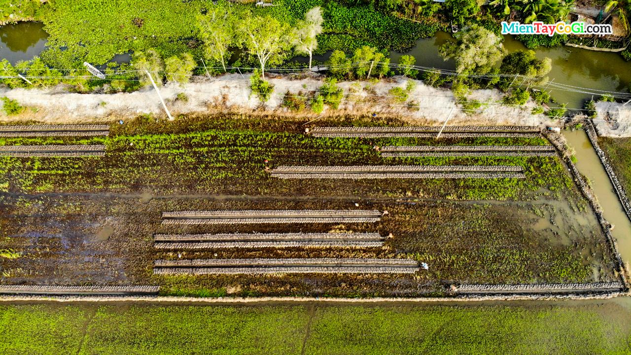 Mảnh ruộng được đắp đất để trồng lúa