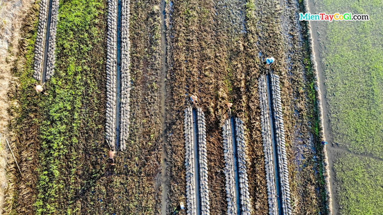 Nông dân đắp đất làm ruộng flycam