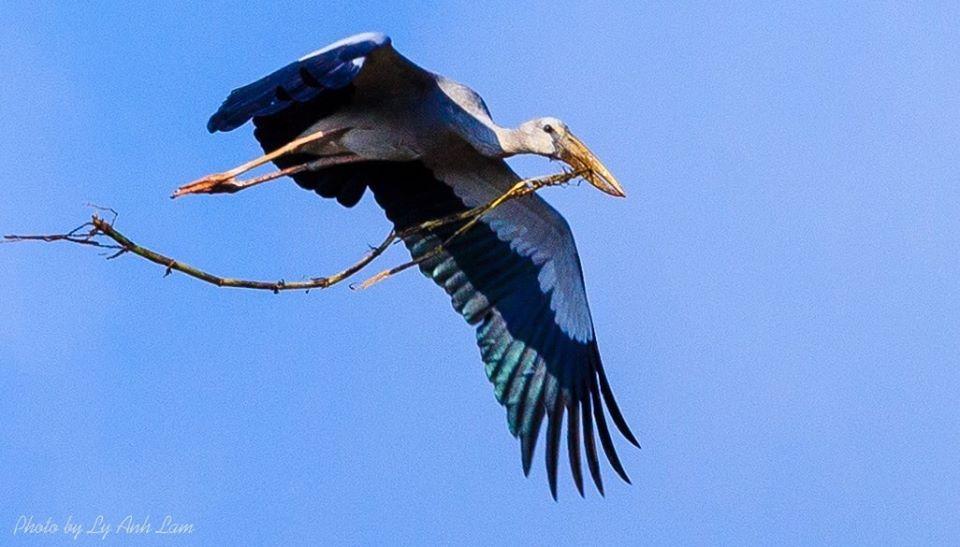 Chim tha mồi về tổ ở Lung Ngọc Hoàng