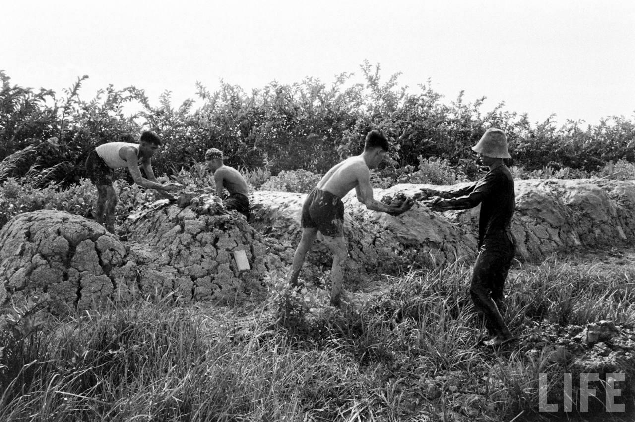 Đắp đất ở Cà Mau năm 1961 - ảnh chụp bởi Howard Sochurek
