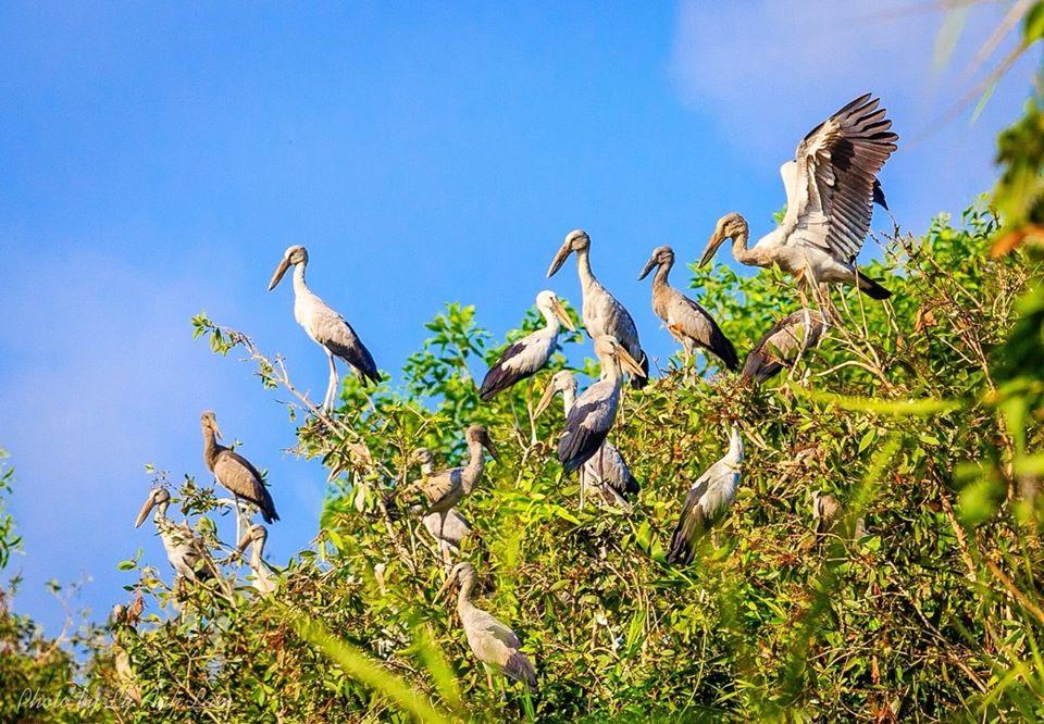 Hệ sinh thái bảo tồn với nhiều loài chim cò