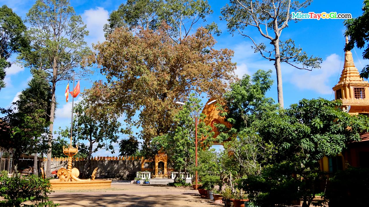 Khuôn viên xanh mát rợp bóng cây ở chùa Khmer cổ nhất Cần Thơ